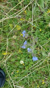 Unamed Taransay Flower 2016